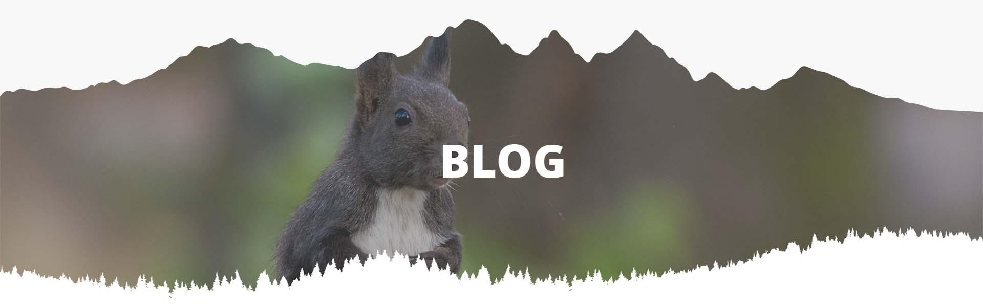 Blog - Tara Dornelor